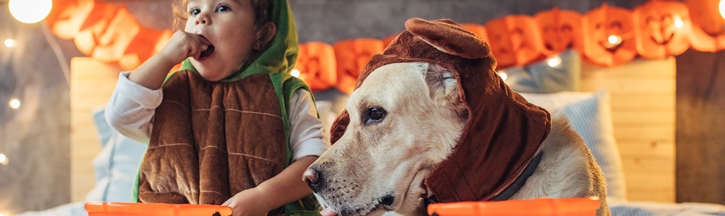 child and dog on bed in halloween costumes