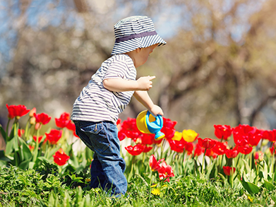 Little child watering tulips