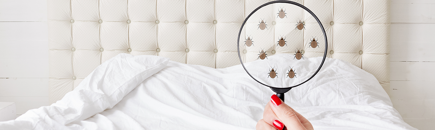 woman holding magnifying glass showing bedbugs