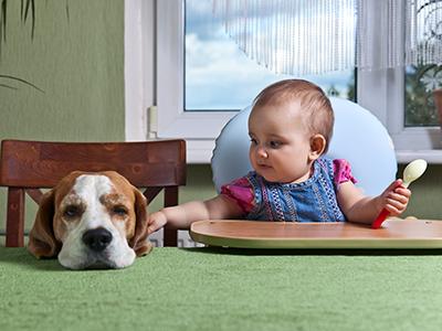 toddler feeding dog at table
